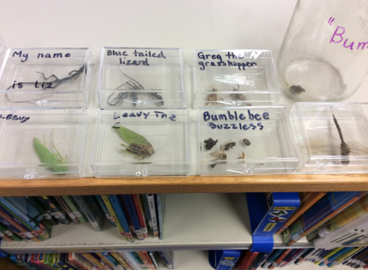 Insect collection in the library